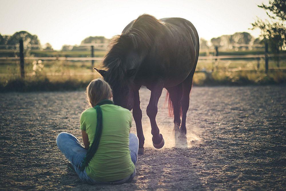 Pferdecoaching Österreich
